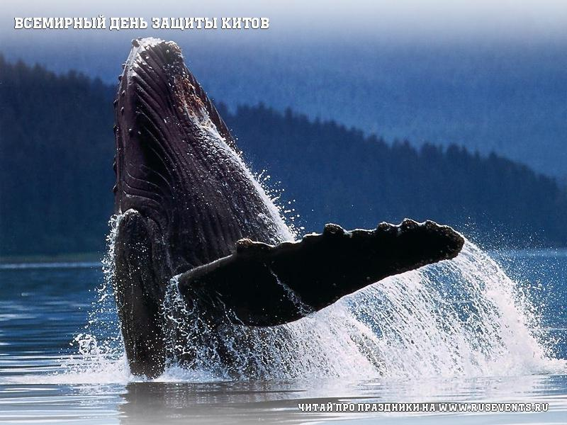 19 february - The world day of protection of whales
