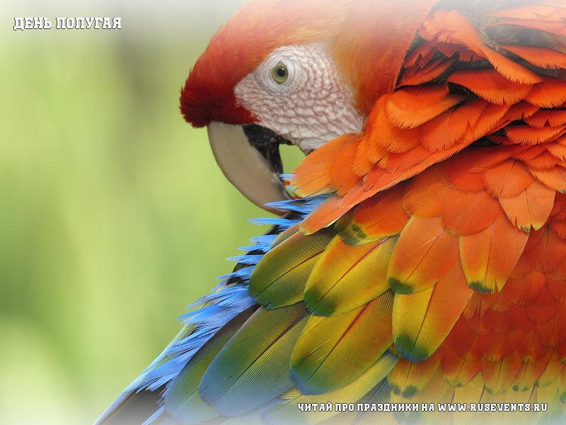 3 may - Day parrot